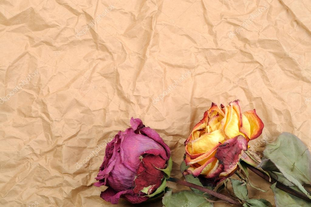 Dry roses on old crumbled paper  Foto Stock #19073167