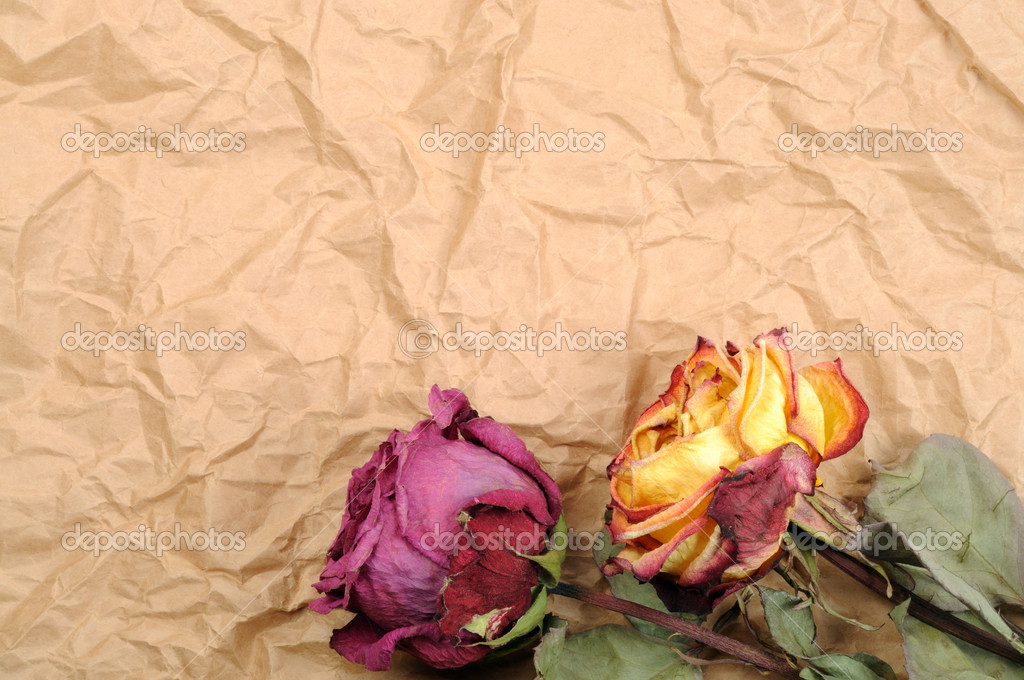 Dry roses on old crumbled paper — Stock fotografie #19073167