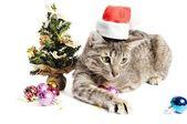 рождественский котенок — Стоковое фото