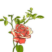 Rose illustration — Stockvektor