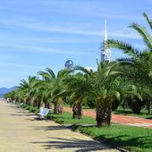 Reconstructed promenade in Batumi — Stock Photo