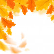 Autumn leaves border isolated over white — Stock Photo