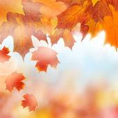 Autumn leaves, background — Stock Photo