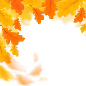Autumn leaves border isolated over white — Stock Photo