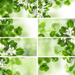 Stock Photo: Green leaves border, summer and spring set