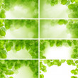 Green leaves - background and border, design elements — Stock Photo