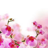 Flowers, blossom summer background with beautiful orchid — Stock Photo