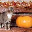 Stock Photo: Cat and pumpkin, autumn