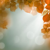 Abstract autumn background with leaves and evening light — Stock Photo