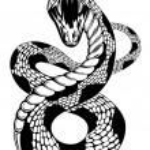 Постер, плакат: Snake attacke