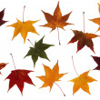 Maple leaves set — Stock Photo