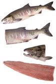 Siberian salmon — Stock Photo