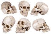 Skull — Stock Photo