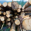 Timber logs — Stock Photo #10185777