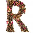 Letter 'R' from herbal tea abc — Foto de Stock