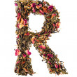 Letter 'R' from herbal teabc — Stock Photo #26561895