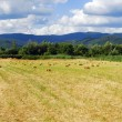 Field panorama — Stock Photo
