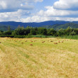 Stock Photo: Field panorama
