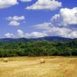 Stock Photo: Field landscape