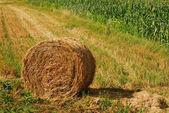 Hay bale — Stock Photo