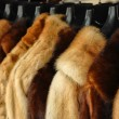 Stock Photo: Fur jackets