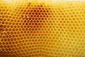 Favo de mel — Foto Stock