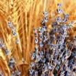 Lavender and wheat — Stock Photo
