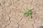 Plant growing on dried soil — Stock Photo