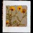 Wild flowers cardboard frame — Stock Photo