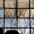 Broken factory window and tree branches — Stock Photo