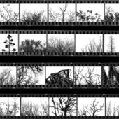 árboles y plantas de hoja de prueba de la película — Foto de Stock