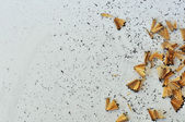 Shavings from sharpened pencil — Stock Photo
