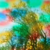 Trees abstract colors — Stock Photo