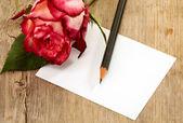 Kaart en rose — Stockfoto