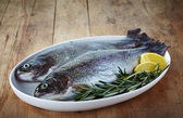 Fresh trout — Stock Photo