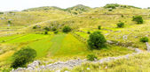 Lentil fields on the island of Lefkada (Greece) — Stock Photo