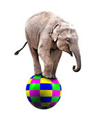 Baby circus elephant — Stock Photo