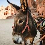 Donkey — Stock Photo #12572659