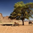 Camels in Wadi Rum — Stock Photo #12753983