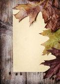 秋の紅葉とビンテージの紙 — ストック写真