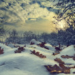 Winter Landscape — Stock Photo #17129705