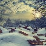 Winter Landscape — Stock Photo #17129705