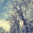 Winter Landscape — Stock Photo #17129821