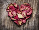 バラの花びら — ストック写真