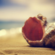 Stock Photo: 	Seashell in sand