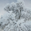 Tree branch in the snow — Stock Photo