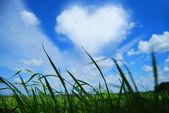 Herz wolke — Stockfoto