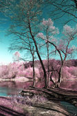 Infrared Photography — Stock Photo
