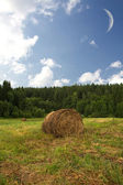 Haystack in a forest — Stock Photo