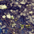 Tree blossoms — Stock Photo
